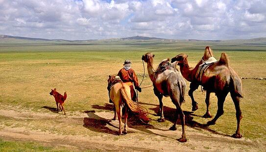 mongolia-nomads-camel-steppe-beautiful-rural
